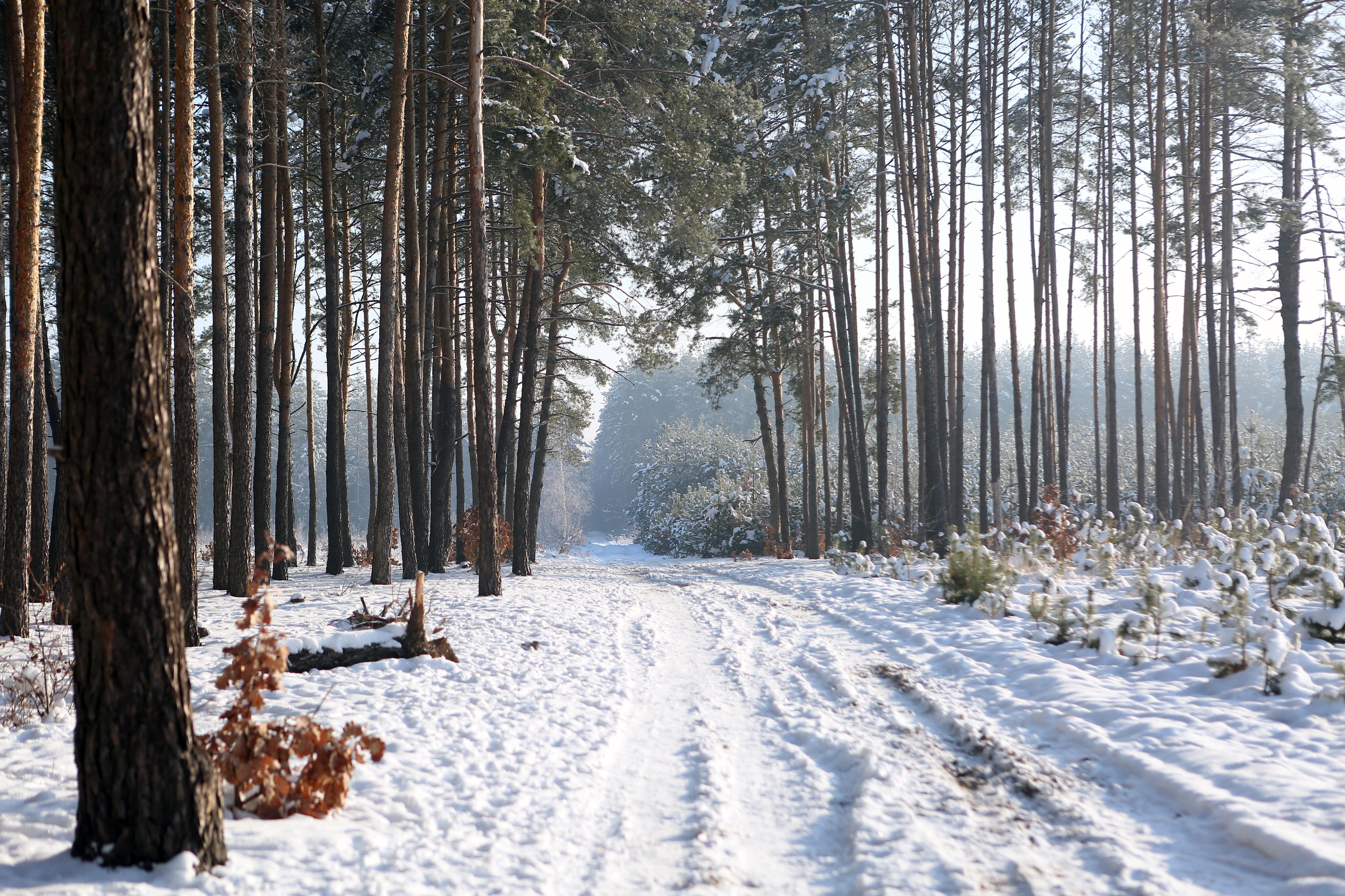 фото зимой леса
