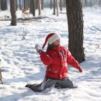 Чем заняться в лесу зимой с детьми. Часть 1.